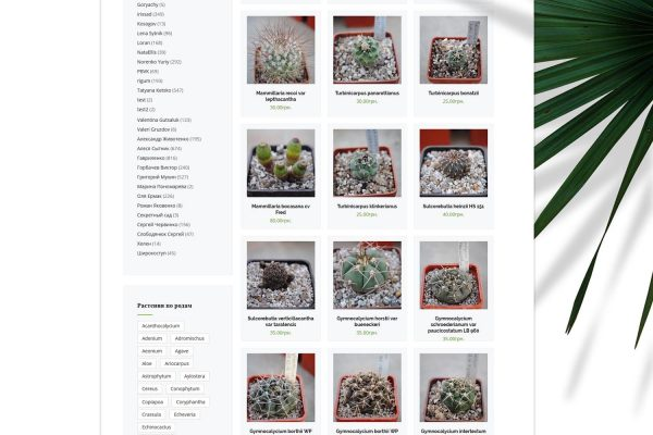 Cactus online shop by Speedflow Bulgaria - screenshot 3