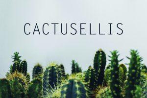 Онлайн магазин Cactusellis от Speedflow - Вашето бизнес решение